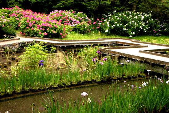 植物園 花づくし_e0048413_20171026.jpg