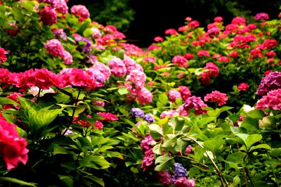 植物園 花づくし_e0048413_20172598.jpg