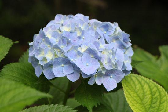 植物園 花づくし_e0048413_20175156.jpg