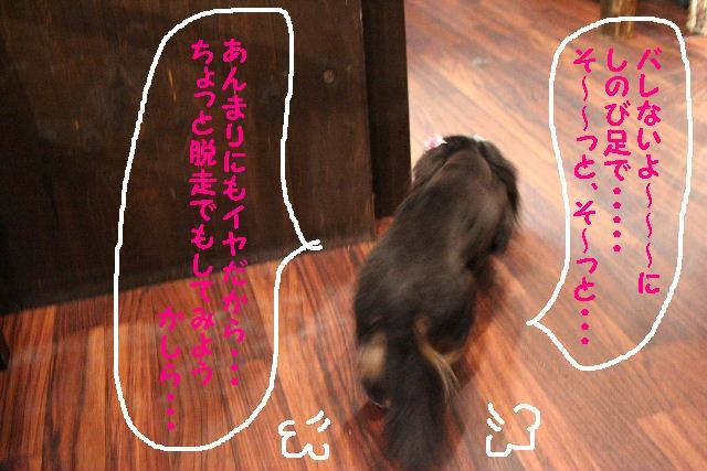 b0130018_17264280.jpg