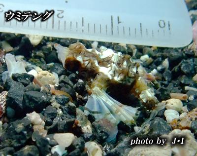 Divehouse Kanaloa  八丈島 ダイビングログ_b0189640_22433841.jpg