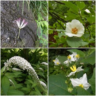 萬葉草花苑の花2