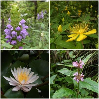萬葉草花苑の花1