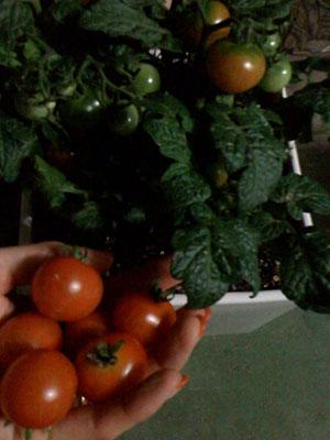 収穫。_d0062651_126259.jpg