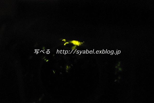 c0153764_1859301.jpg