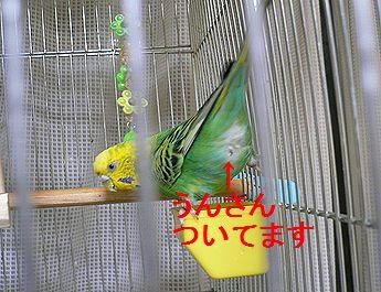 f0196665_0191376.jpg