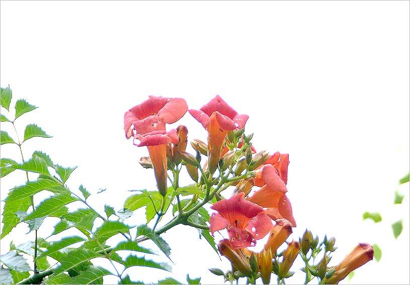 f0198771_0403932.jpg
