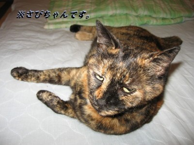 f0091785_2011934.jpg