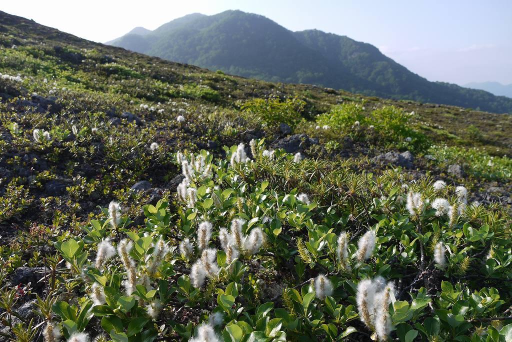6月22日、樽前山の花-マルバシモツケ他-_f0138096_1028425.jpg