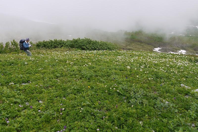 6月27日、暑寒別岳-その2-_f0138096_11333895.jpg