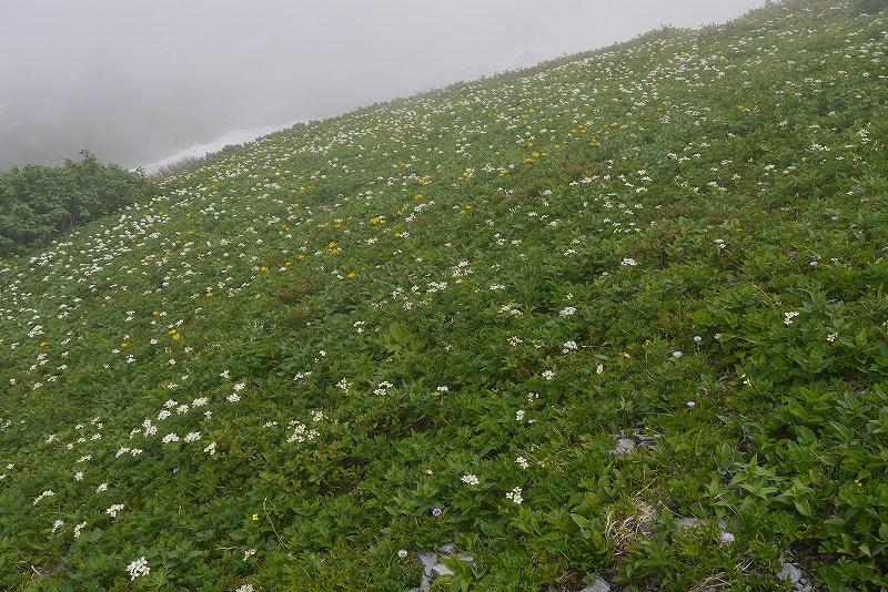 6月27日、暑寒別岳-その2-_f0138096_11335097.jpg