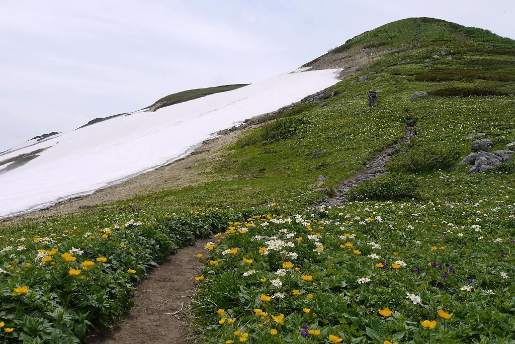 6月27日、暑寒別岳-その2-_f0138096_17521853.jpg