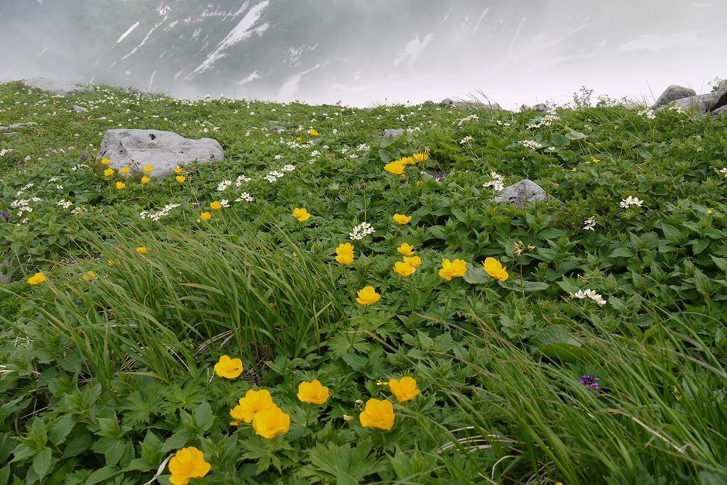 6月27日、暑寒別岳で見た花_f0138096_20205779.jpg