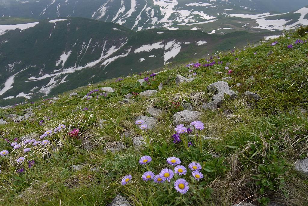 6月27日、暑寒別岳で見た花_f0138096_20215158.jpg