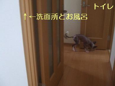 f0179203_1634316.jpg