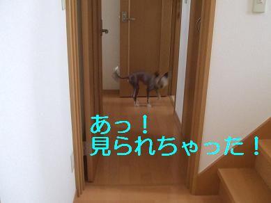 f0179203_16344516.jpg