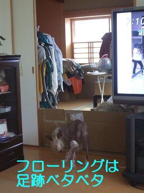 f0179203_7135669.jpg