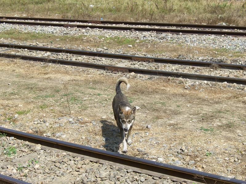 旧泰緬鉄道-Death Railway-の旅_d0116009_1143591.jpg