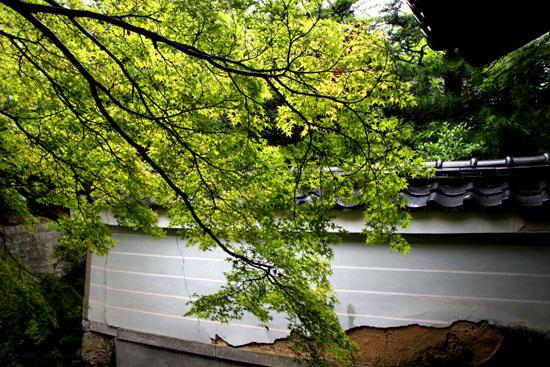 蓮華寺の石仏_e0048413_18165766.jpg