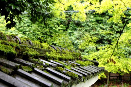 蓮華寺の石仏_e0048413_1817143.jpg