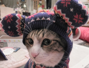 ぽにゃーまうす猫 ぽー編。_a0143140_22294413.jpg