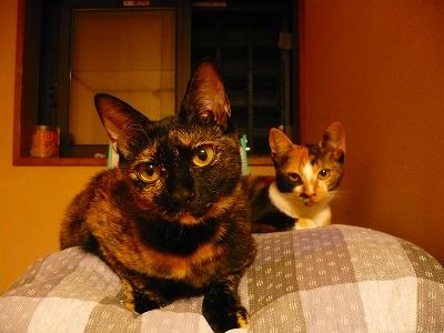 再び、猫サンとの生活を始めた経緯_c0035843_12372085.jpg