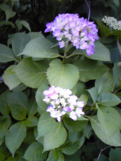 加齢な花!_d0165645_8343350.jpg