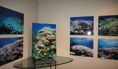 生命のサンゴ礁_e0109554_21451284.jpg