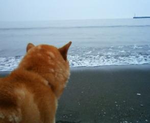 海の子_b0011075_23364247.jpg