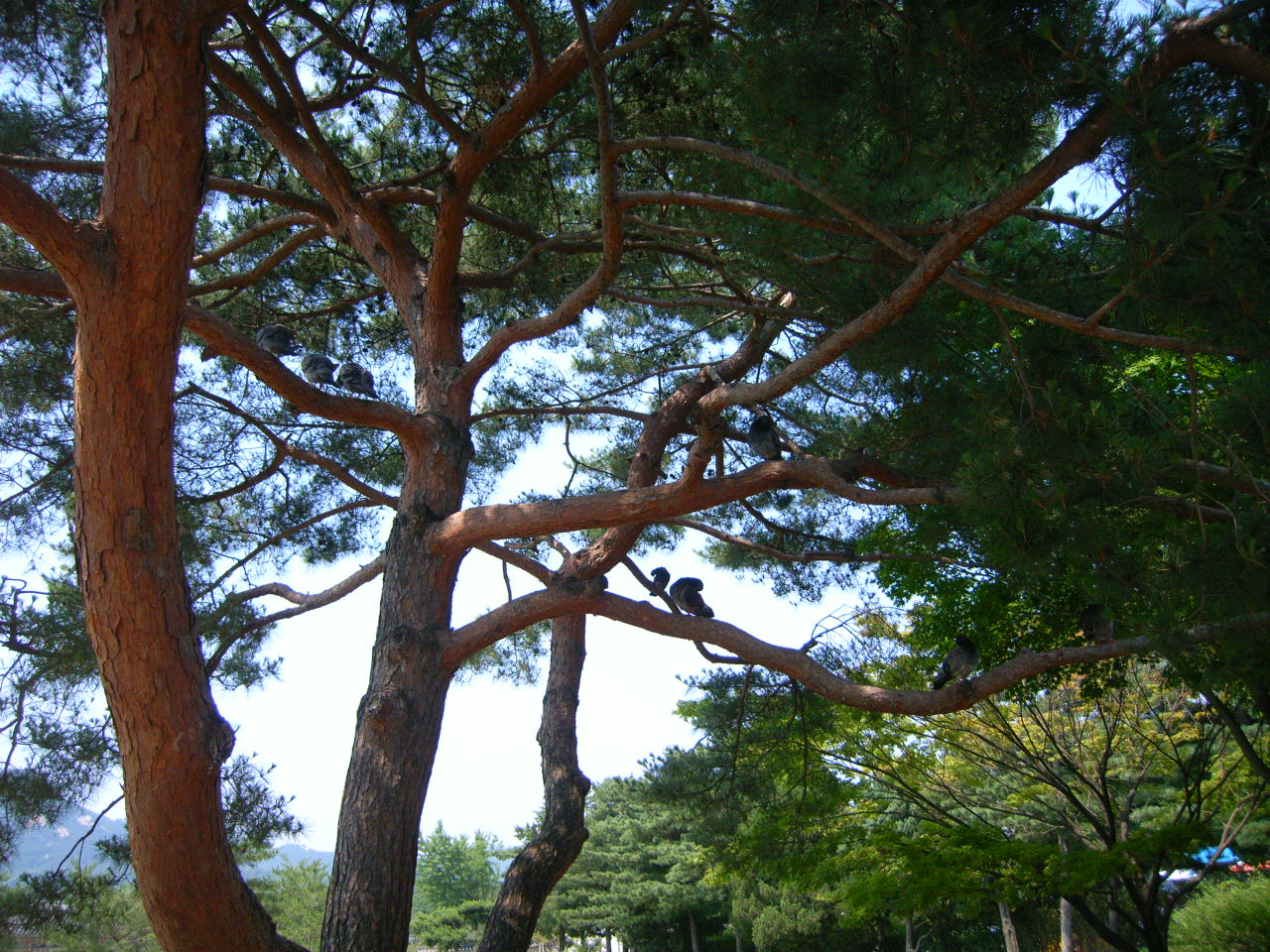 KOREA-2_c0143482_194126100.jpg