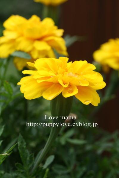 b0136683_15471055.jpg