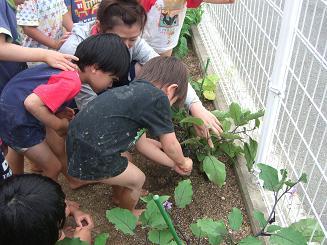 今年 初めての収穫をしました。_c0197584_16213997.jpg