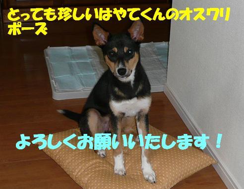f0121712_058493.jpg