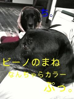 f0148927_737937.jpg