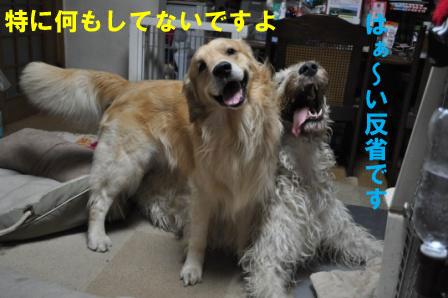 f0176830_2041147.jpg