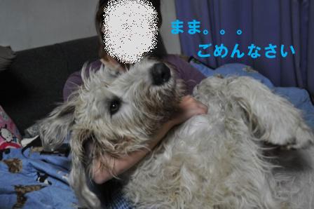 f0176830_20421695.jpg