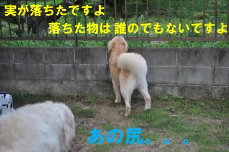 f0176830_20535413.jpg