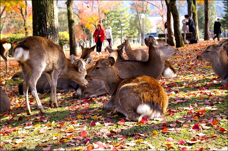 奈良之鹿_c0073742_22562930.jpg