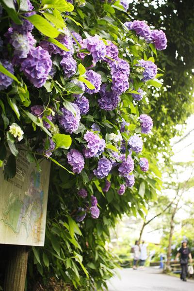おばはんは鎌倉好き_f0149855_10165143.jpg