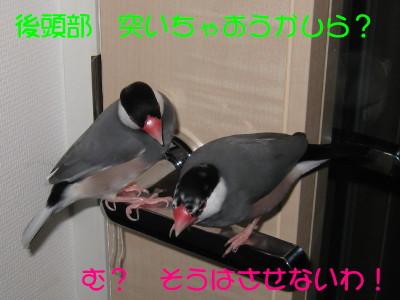 b0158061_20401663.jpg