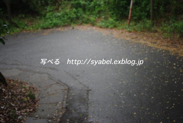 c0153764_2011674.jpg