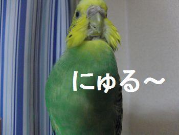 f0196665_171759.jpg