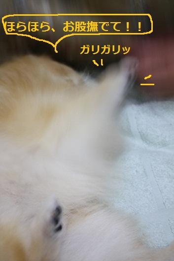 b0182968_1322493.jpg
