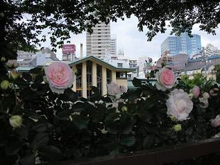 Wedding Topiary :「花:少し特別なフラワーアレンジ」_c0128489_2135158.jpg