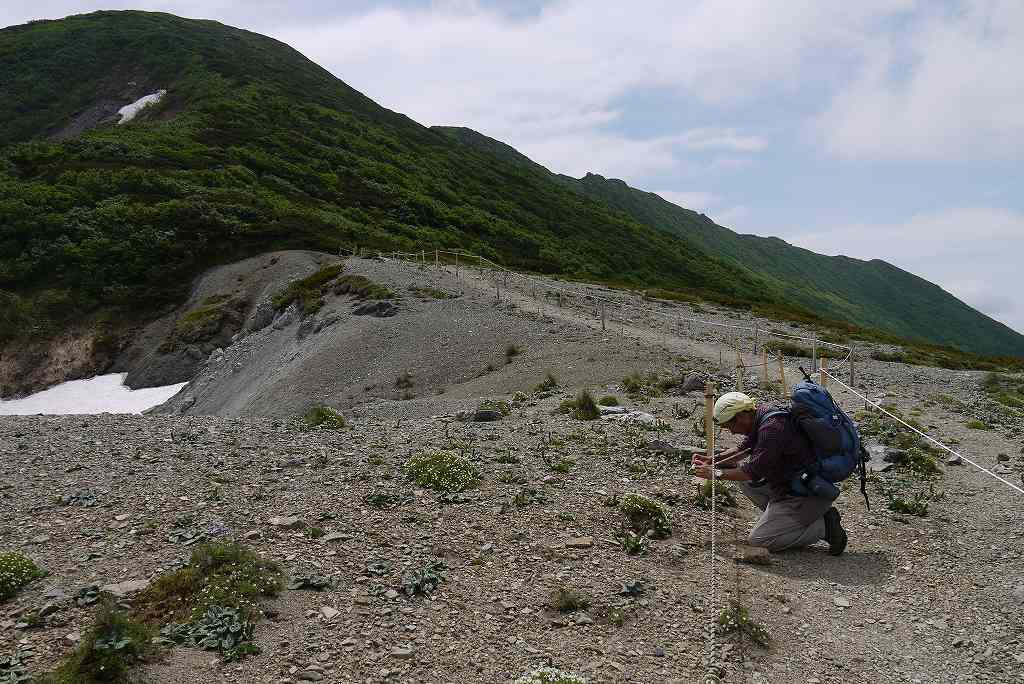 6月29日、夕張岳-その2-_f0138096_1371855.jpg