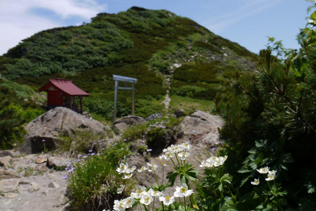 6月29日、夕張岳-その2-_f0138096_1375345.jpg