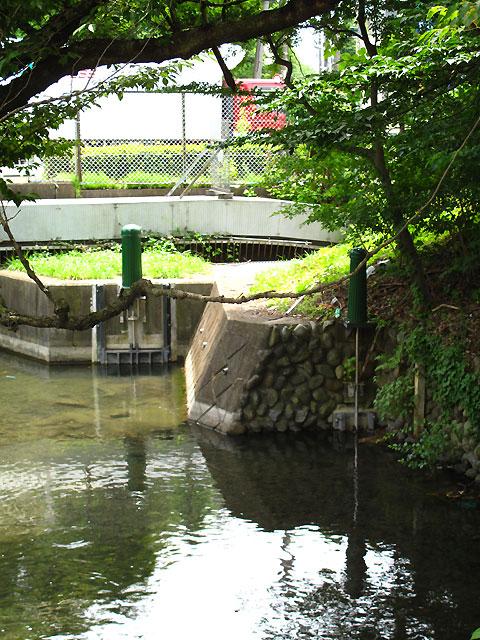柴崎分水(立川分水)(1)分水地点〜昭和記念公園まで_c0163001_0184858.jpg
