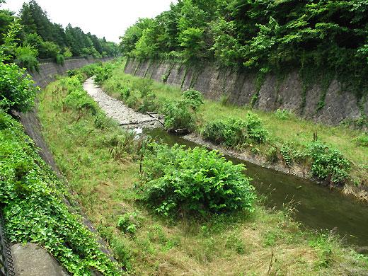 柴崎分水(立川分水)(1)分水地点〜昭和記念公園まで_c0163001_022492.jpg