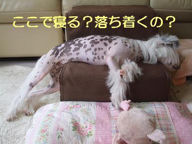 f0179203_851510.jpg