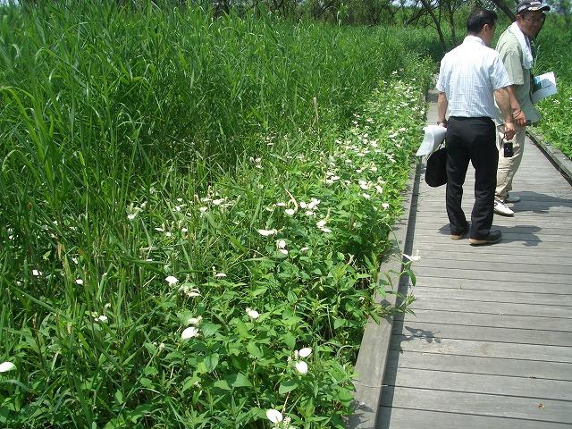 注目の「浮島ヶ原自然公園」を新人議員7名で視察!_f0141310_23314389.jpg